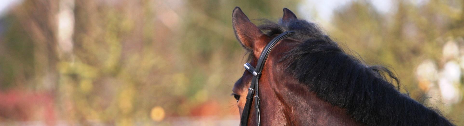 Algemene voorwaarden - Horse Power Life Power