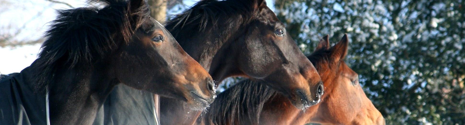 Blog - Horse Power Life Power