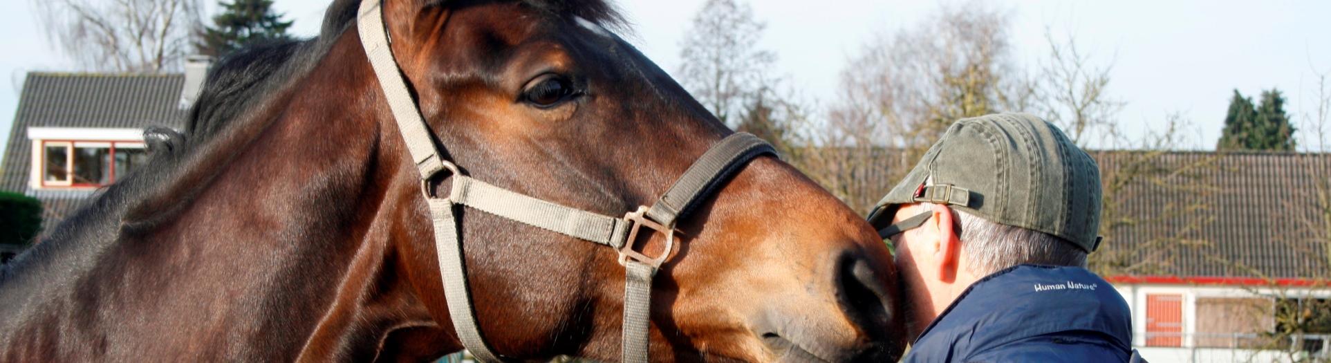 Contact - Horse Power Life Power