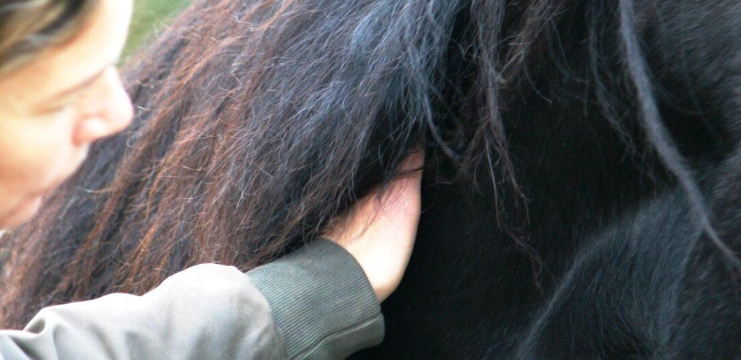 In verbinding met je paard deel 1 – Hoe maak jij contact?