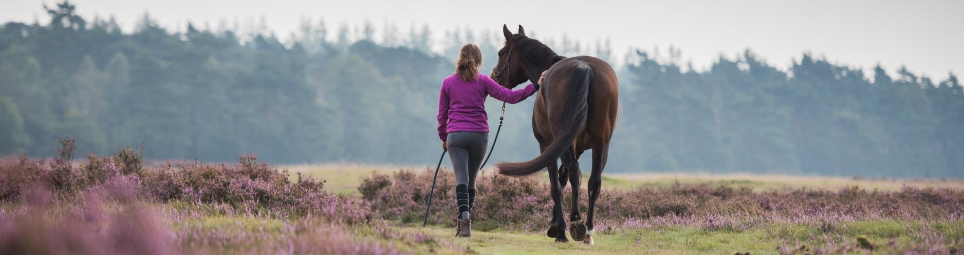 Speedcoachsessie - Horse Power Life Power