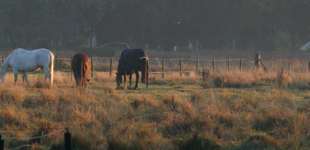 Hoe je tijd maakt voor je paard (en voor jezelf)