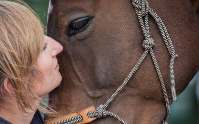 Het gesprek met je paard