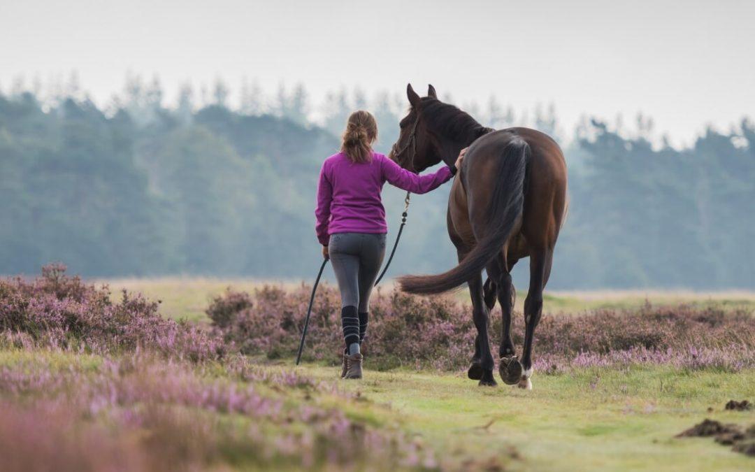 Uit liefde voor het paard