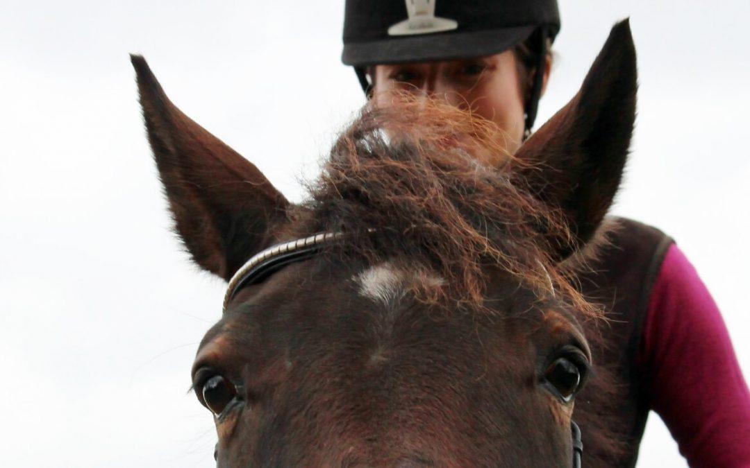 Wat als je frustratie voelt in de training met je paard